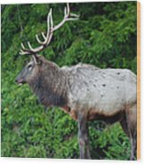 Standing Proud Wood Print