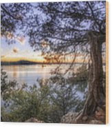 Standing Sentinel - Arkansas - Cadron Settlement Park Wood Print