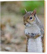 Standing Squirrel Wood Print
