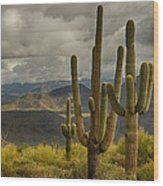 Standing Tall In The Sonoran Desert  Wood Print