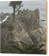 Standing Tall On The Rock Wood Print