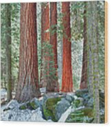 Standing Tall - Sequoia National Park Wood Print