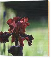 Standout Stand Tall Stand Proud Wood Print