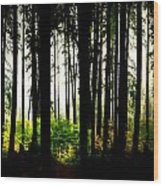 Stanley Park Triptych Right Wood Print