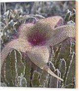 Stapelia Hirsuta Flower-oahu Hawaii Wood Print