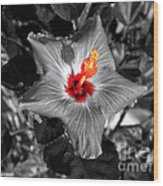 Star Bright Hibiscus Selective Coloring Digital Art Wood Print