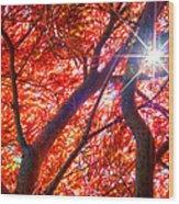 Star Light Thru Maple Wood Print