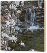 Star Magnolia And Flowing Water Wood Print