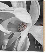 Star Magnolia Flower Wood Print