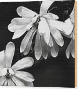 Star Magnolia In Black And White Wood Print