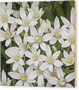 Star Of Bethlehem Wood Print
