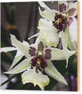 Star Orchids Wood Print