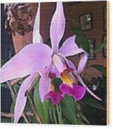 Star Orchid  Wood Print