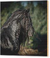 Star Stallion Wood Print