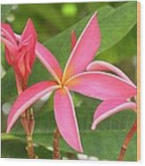 Starburst Plumeria Wood Print