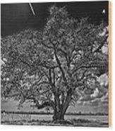 Stardom Bw Wood Print