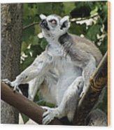 Lemur Stare Wood Print
