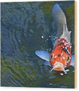 Stare Down With A Koi Wood Print