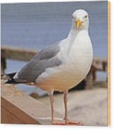 Stare Of A Seagull Wood Print