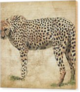 Stare Of The Cheetah Wood Print