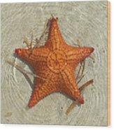 Starfish 1 Of Bottom Harbour Sound Wood Print