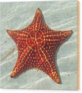 Starfish 3 Of Bottom Harbour Sound Wood Print