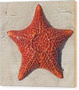 Starfish 4 Of Bottom Harbour Sound Wood Print