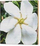 Starfish Gardenia  Wood Print