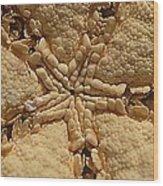 Starfish Wood Print