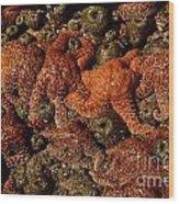 Starfish Low Tide Cape Sebastian Oregon Coast Wood Print