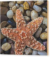 Starfish On Rocks Wood Print