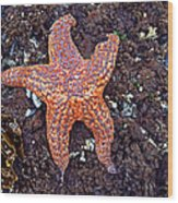 Starfish - Oregon Coastline Wood Print