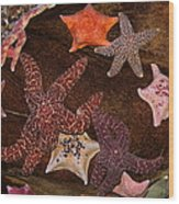 Starfish Variety 5d24133 Wood Print
