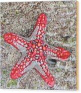 Starfish Wonder Wood Print