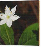Starflower Wood Print by Christina Rollo