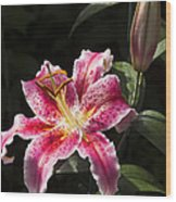 Stargazer Bloom And Bud Wood Print