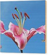 Stargazer Lily Series 1 Of 4 Wood Print