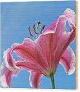 Stargazer Lily Series 3 Of 4 Wood Print