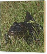 Staring Alligator. Melbourne Shores. Wood Print
