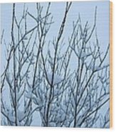 Stark Beauty - Snow On Branches Wood Print