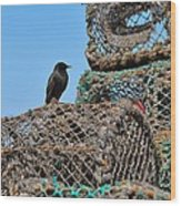 Starling On Lobster Pots Wood Print