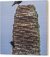 Starlings 2 Wood Print