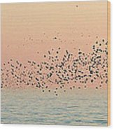 Starlings Wood Print