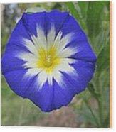 Starry Blue Enchantment Wood Print