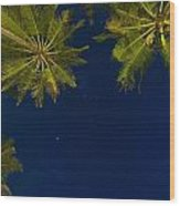 Stars At Night With Palm Tree Thalpe Wood Print