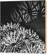 Stars Shadow Wood Print