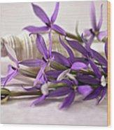 Starshine Laurentia Flowers And White Shell Wood Print