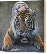Startled Tiger Wood Print