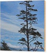 Stately Pine Wood Print