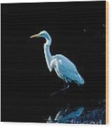 Stately Snowy Egret Wood Print